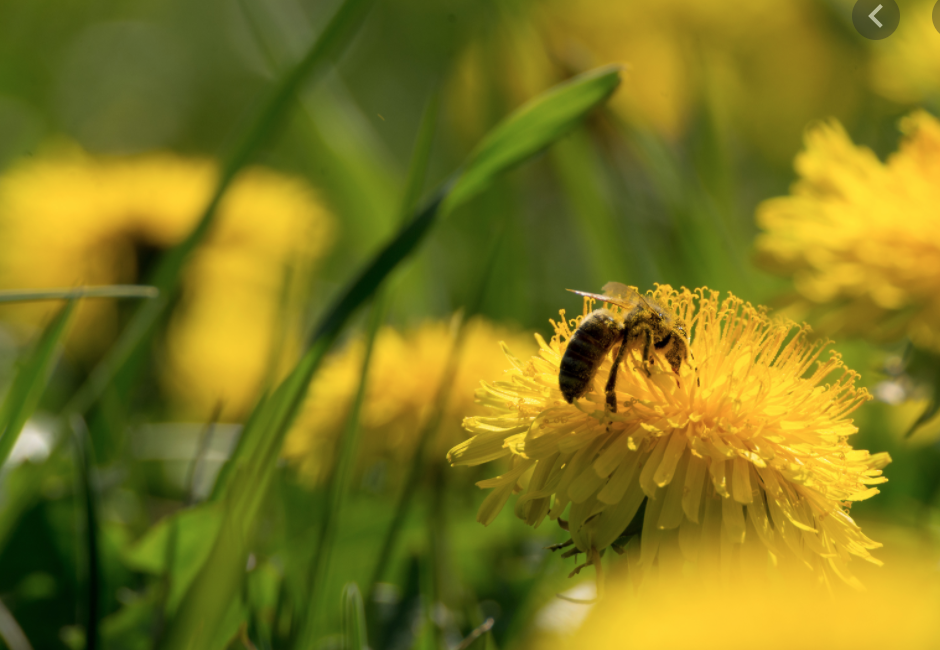 Finding The Best Company For Bee Removal Near Me