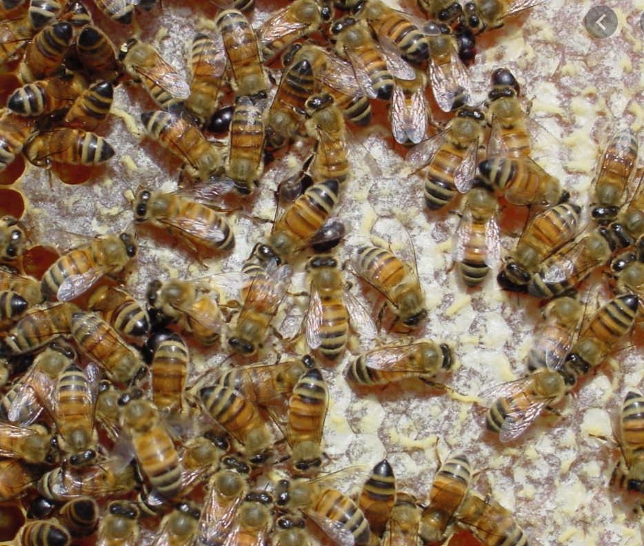 Efficient Bee Hive Removals